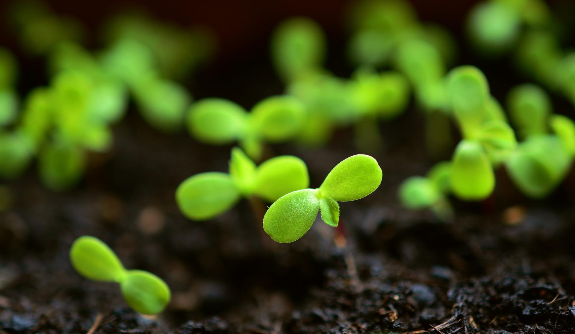 plant-4036131_1920